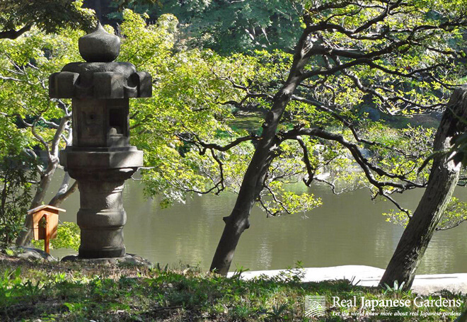 Tree in nagare form at the pond in the Kyu-Furukawa garden.