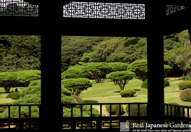 View from the former Taiwan Pavilion towards the dragon tree shaped pines in Shinjuku Gyoen.