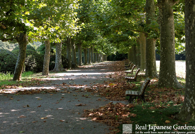 A gravel covered path lined with plane trees in autumn in Shinjuku Gyoen.