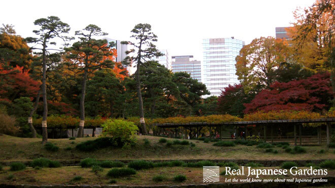 Colorful autumn scenery in the Koishikawa Korakuen Garden in Tokyo.
