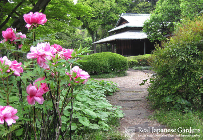 Peony in front of the teahouse.